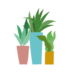 potted plants leaves decoration isolated icon vector image