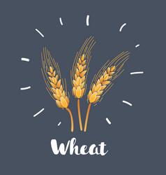 wheat on dark background vector image