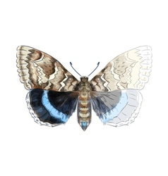 Butterfly Catocala Fraxini vector image