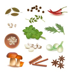 group of spice vector image