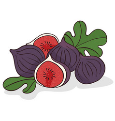 Isolate ripe figs or fig fruits vector
