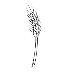sketch of the barley vector image