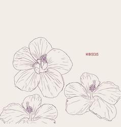hawaiian hibiscus flowers sketch vector image