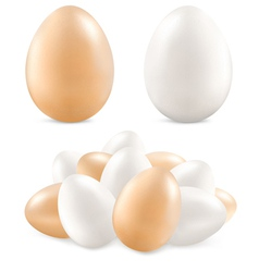 white and yellow eggs vector image vector image
