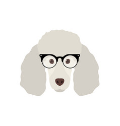 cute poodle dog in fashion glasses simple dog vector image