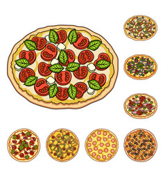 Different pizza cartoon icons in set collection vector
