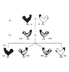 Genetics chart vintage vector