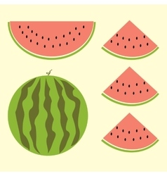 Fet of watermelon with sign flat style vector image vector image