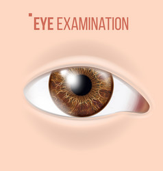 Human eye vision concept clinic medical vector