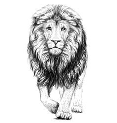 lion sketchy graphical portrait vector image