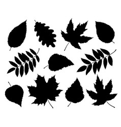 Set of isolated leaves and branches silhouettes vector