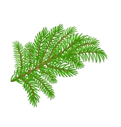 Spruce Christmas tree symbol celebration vector