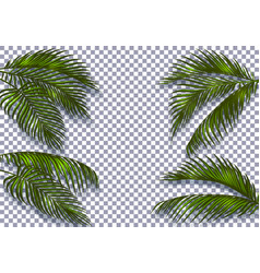 Tropical dark green palm leaves with a shadow are vector