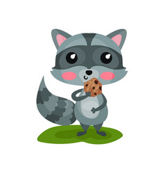 Adorable gray raccoon eating tasty cookie and vector
