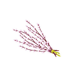 Bunch of spring willow branches tied with ribbon vector