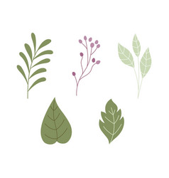 foliage leaves branch botanical herbs nature icons vector image
