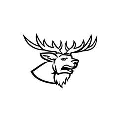 Head a red deer or cervus elaphus stag or buck vector