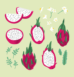 summer set with dragon fruit pitaya flowers and vector image