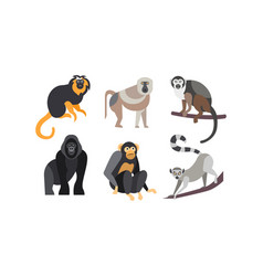 Collection of monkeys different breeds of monkeys vector