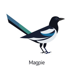 magpie isolated on white background intelligent vector image