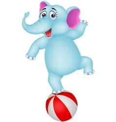elephant cartoon on ball vector image