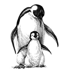 Penguins family cute baby penguin and parent vector