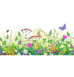 seamless border with summer meadow plants and vector image