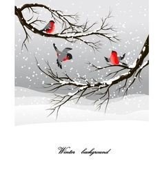 Winter background with bullfinch vector image