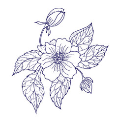 hand drawing peony flower vector image