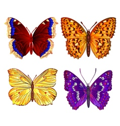 Butterflies various mountain meadow and forest vector image
