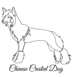 chinese crested dog outline vector image vector image