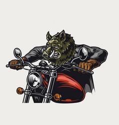 Colorful dangerous wild boar head motorcyclist vector