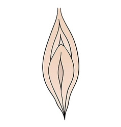 Female vagina vector