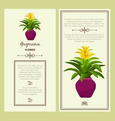 guzmania flower in pot banners vector image