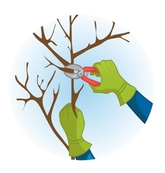 Hands trimming a tree with garden clippers vector image