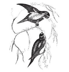 Love birds vintage vector