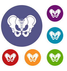 pelvis icons set vector image