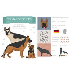 German shepherd dog isolated on white vector