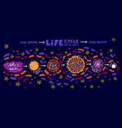 sun life cycle vector image