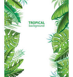 tropical leaves and plants vector image vector image