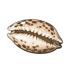 Colorful cowrie or cowry sea shell sketch style vector