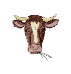 doodle cow vector image