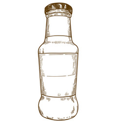 engraving drawing sauce bottle vector image