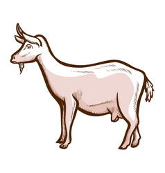 Goat wether hand drawn icon domestic animal vector