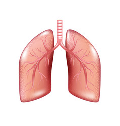 human lung cancer diagram isolated respiratory vector image