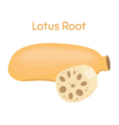 Lotus root exotic fruit natural tropical plant vector