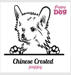 Puppy chinese crested - peeking dogs - breed face vector