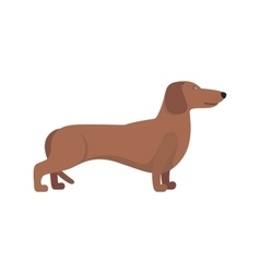Light brown dachshund breed standing on white vector