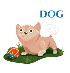 educational flashcard dog plays with ball on the vector image