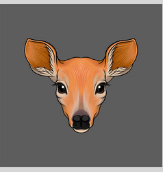 Head of roe deer portrait of wild animal hand vector